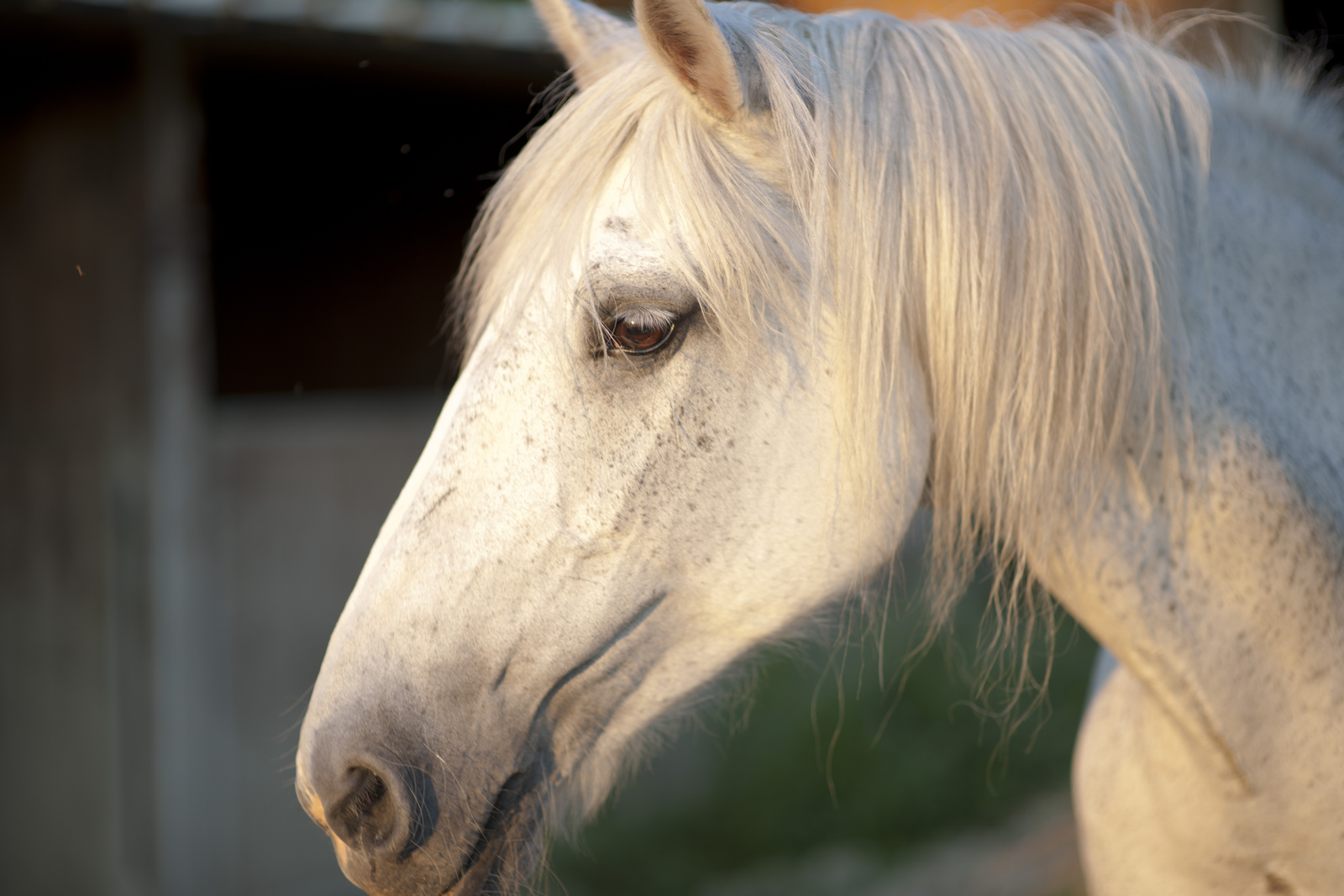 lpa_cavallo